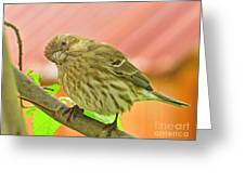 Sweet Finch Painted Effect Greeting Card