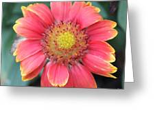 Sweet In Pink Greeting Card by Marilyn West