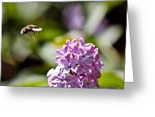 Sweet Landing Greeting Card