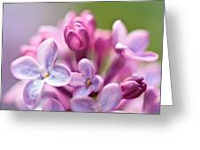 Sweet Lilac Greeting Card