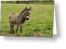 Sweet Little Donkey Greeting Card