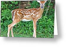 Sweet Little Fawn Greeting Card