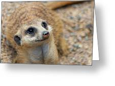 Sweet Meerkat Face Greeting Card