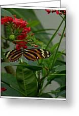 Sweet Nectar Greeting Card