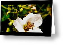 Sweet Nectar Shot Greeting Card