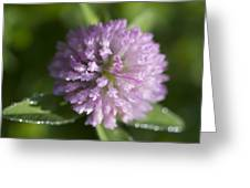 Sweet Pink Clover Greeting Card