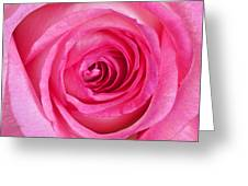Sweet Pink Rose IIi Greeting Card