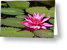 Sweet Pink Water Lily In The River Greeting Card
