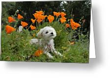 Sweet Sunshine Greeting Card