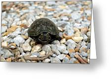 Sweet Turtle Face Greeting Card
