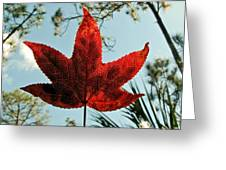 Sweetgum Greeting Card