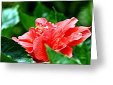 Sweetheart Red Greeting Card