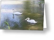 Swimming Swans Greeting Card