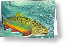 Swimming Upstream Greeting Card by Sheryl Brandes