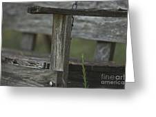 Swing In The Woods Greeting Card