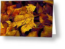 Sycamore Stands Out Greeting Card