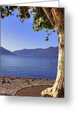 sycamore tree at the Lake Maggiore Greeting Card