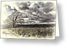 Sycamore Tree Cream Greeting Card