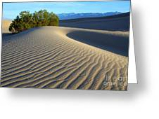 Symphony Of The Sand Greeting Card by Bob Christopher