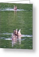Synchronized Ducking Greeting Card