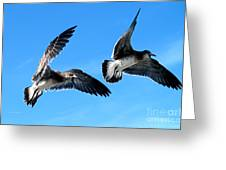 Synchronized Flying Greeting Card
