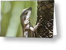 Ta-ta Lizard Greeting Card