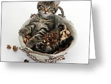 Tabby Kitten In Potpourri Basket Greeting Card