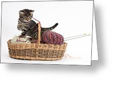 Tabby Kitten Playing With Knitting Wool Greeting Card