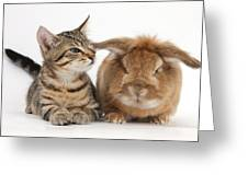 Tabby Kitten With Rabbit Greeting Card