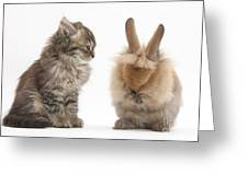 Tabby Kitten With Young Rabbit, Grooming Greeting Card