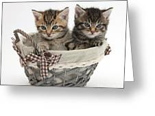 Tabby Kittens In A Basket Greeting Card