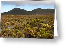 Table Mountain National Park Greeting Card