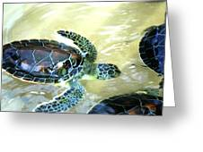 Tag Along Turtle Greeting Card