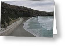 Taiaroa Head Nz Greeting Card