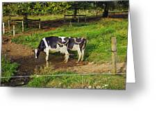 Tail Of Two Cows Greeting Card