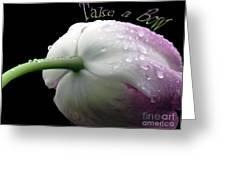 Take A Bow Greeting Card