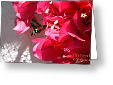 Taking The Nectar Greeting Card