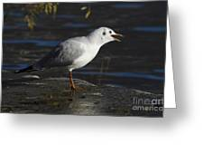 Talking Bird Greeting Card