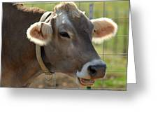 Talking Cow Greeting Card