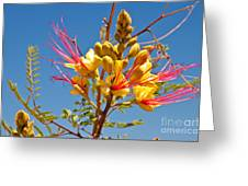 Tall And Bright Greeting Card