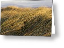 Tall Grass Blowing In The Wind Greeting Card