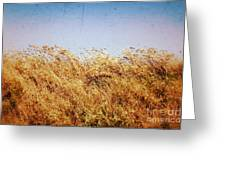Tall Grass In The Wind Greeting Card