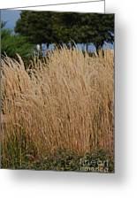 Tall Grass Greeting Card