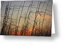 Tall Grasses Blowing In The Wind Greeting Card