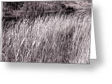 Tall Grasses Greeting Card