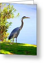 Tall Grey Heron Greeting Card