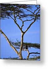 Tall Serengeti Tree And Baboon Greeting Card