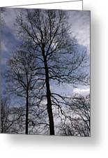 Tall Silhouetted Trees Greeting Card