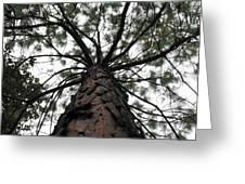 Tall Tree Greeting Card
