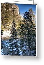 Tall Trees Greeting Card by Lisa  Spencer